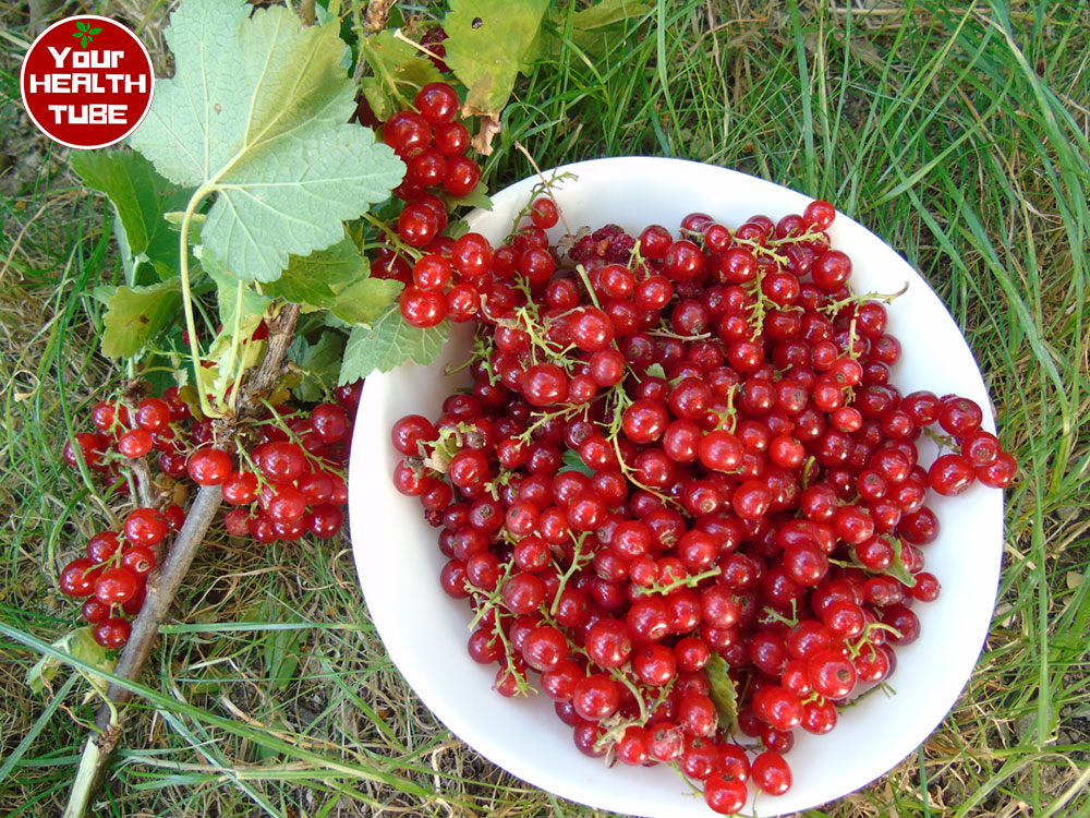 Red Currant: Ideal Berries for Perfect Health
