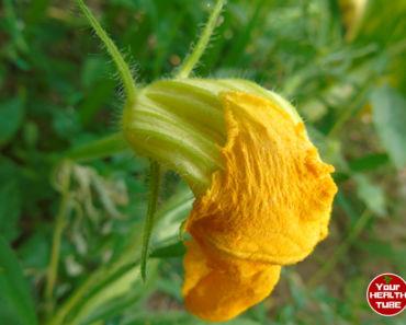 Pumpkin Flowers Nutrition