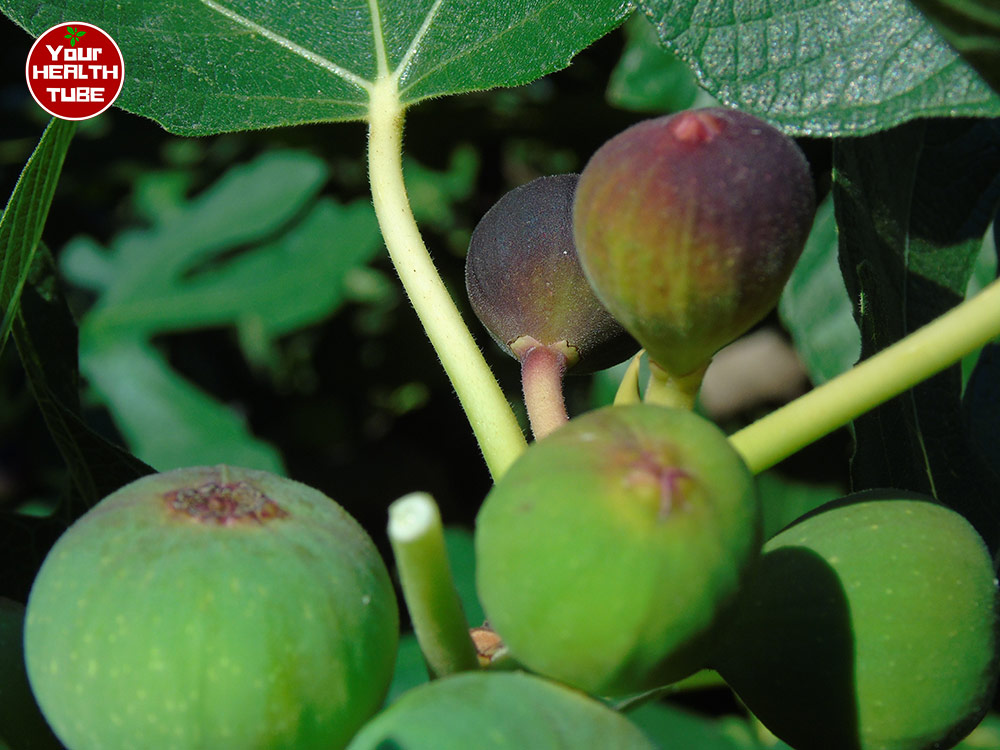 Figs Nutrition: Amazing Food for Hemorrhoids, High Blood Pressure, Cholesterol, and MORE